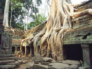 Ta Phrom Roots1 800px